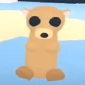 El suricata